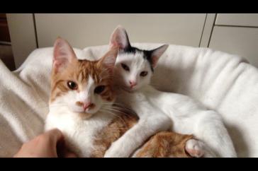 Archie y Boo! Foto Diciembre 2014