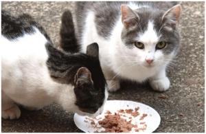 gatoscomiendocalle
