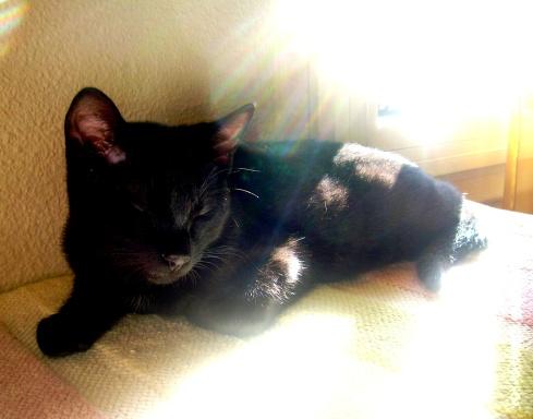 gatito-aser