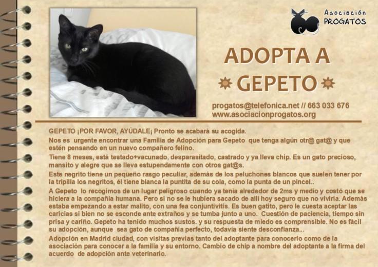 GepetoProgatos0517