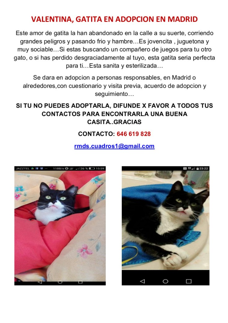 CARTEL GATITA VAQUITA EN ADOPCION EN MADRID 2
