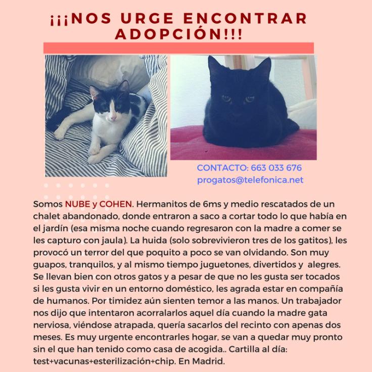 Cartel Nube_Cohen_Adopcion_Urgente